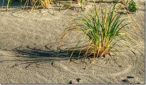 sea grass excerpt